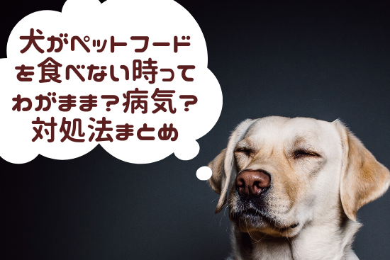 犬 ペットフード ご飯 食べない時 わがまま 病気 対処法 体験談