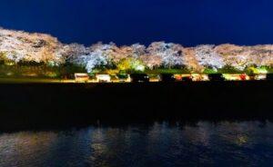 岡崎桜祭り2021 夜桜 ライトアップ